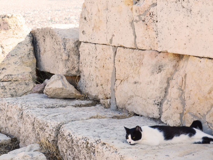 Nuage-Breton-chat-grec