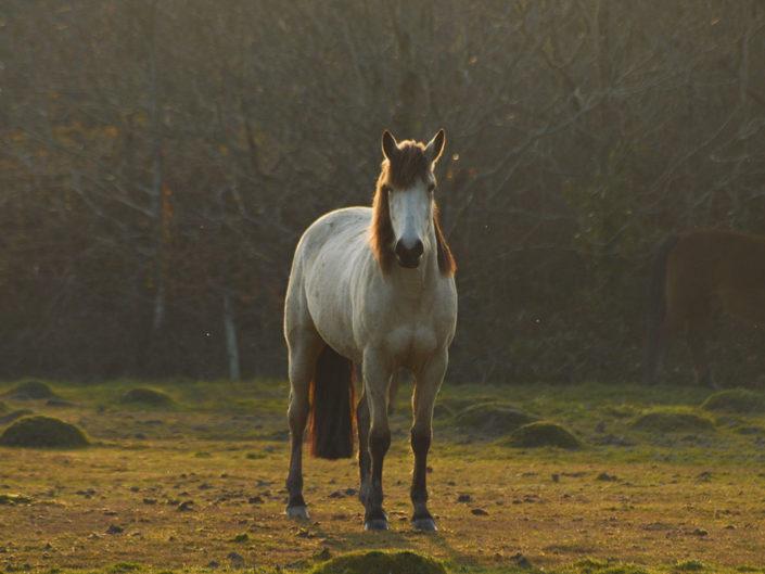 Nuage-Breton-cheval